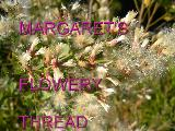 Margaret's Flowery Thread - title slide