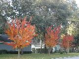 3 flaming trees